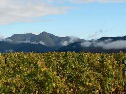 Marlborough is New Zealand's largest wine region